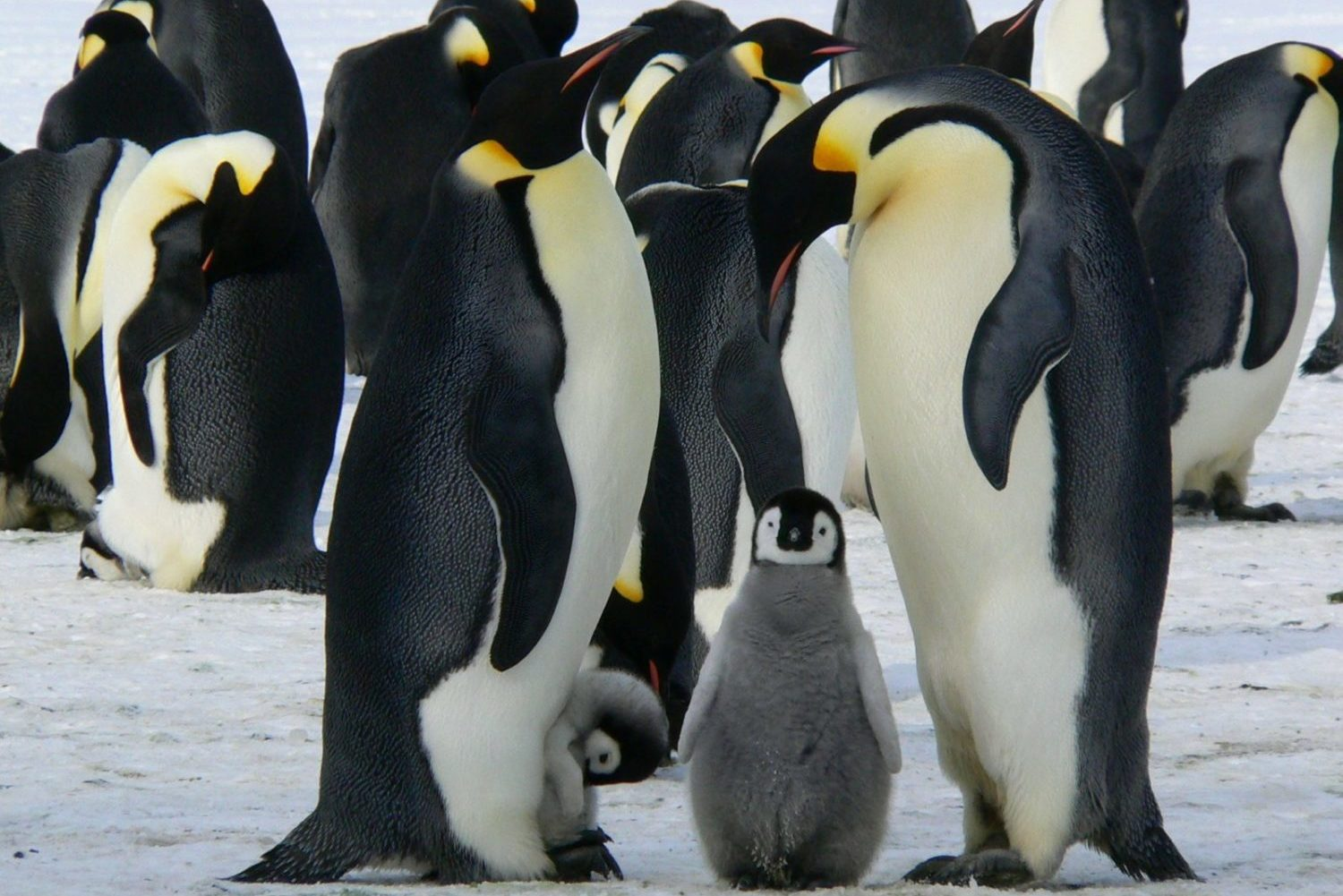 penguins-Customer-Relations-Management-Software-CRM-Law-Firms