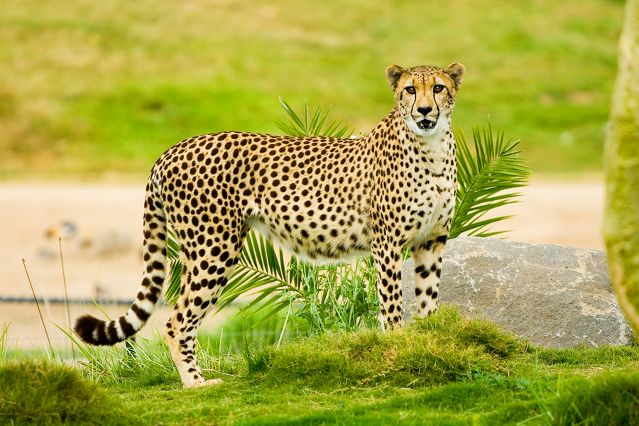 Page loading speed matters - be fast like a cheetah
